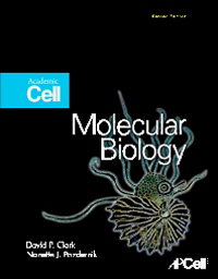 Molecular Biology, 2nd ed.