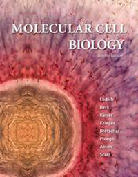 Molecular Cell Biology, 7th ed.(Int'l ed.)