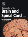 Color Atlas of the Brain & Spinal Cord, 2nd ed.